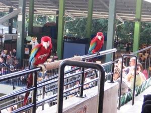 Birds@crocoseum
